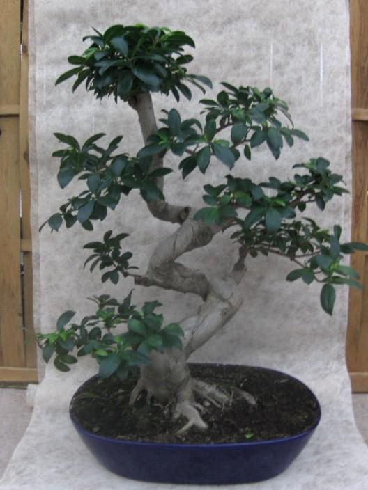 bonsai1.jpg