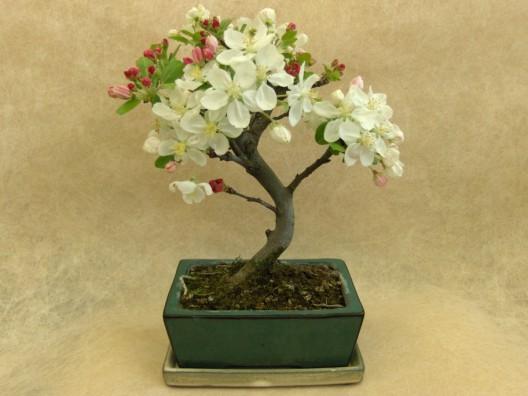 bonsai19.jpg