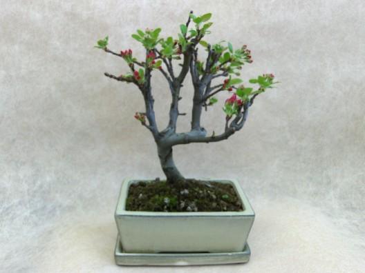 bonsai20.jpg