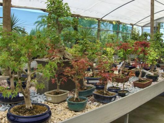 bonsai27.jpg