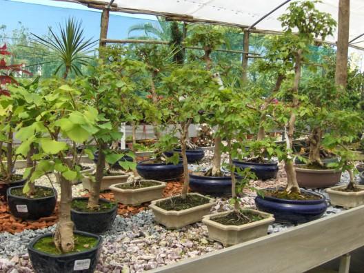 bonsai28.jpg