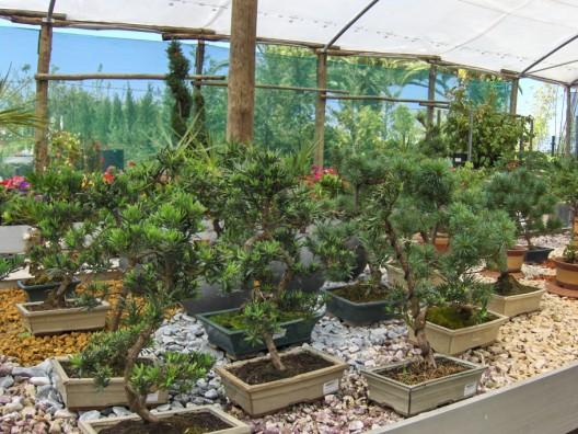 bonsai29.jpg