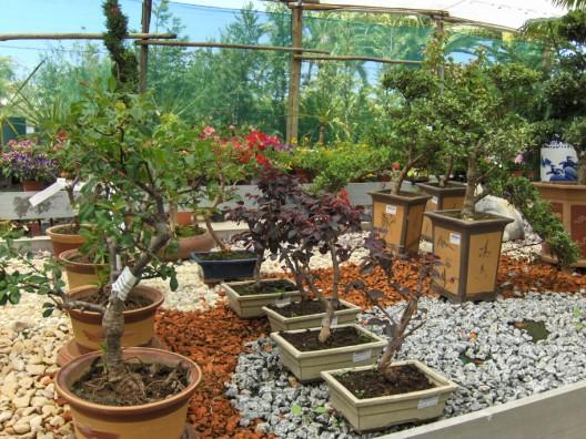 bonsai31.jpg