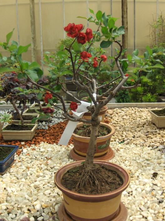 bonsai34.jpg