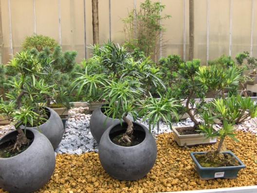 bonsai35.jpg