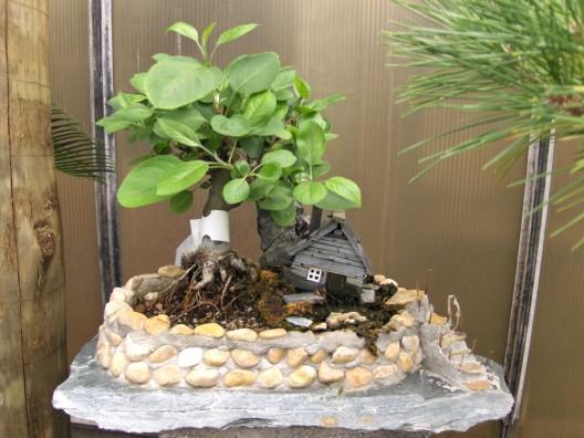 bonsai36.jpg