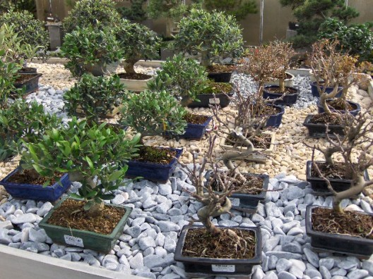 bonsai37.jpg