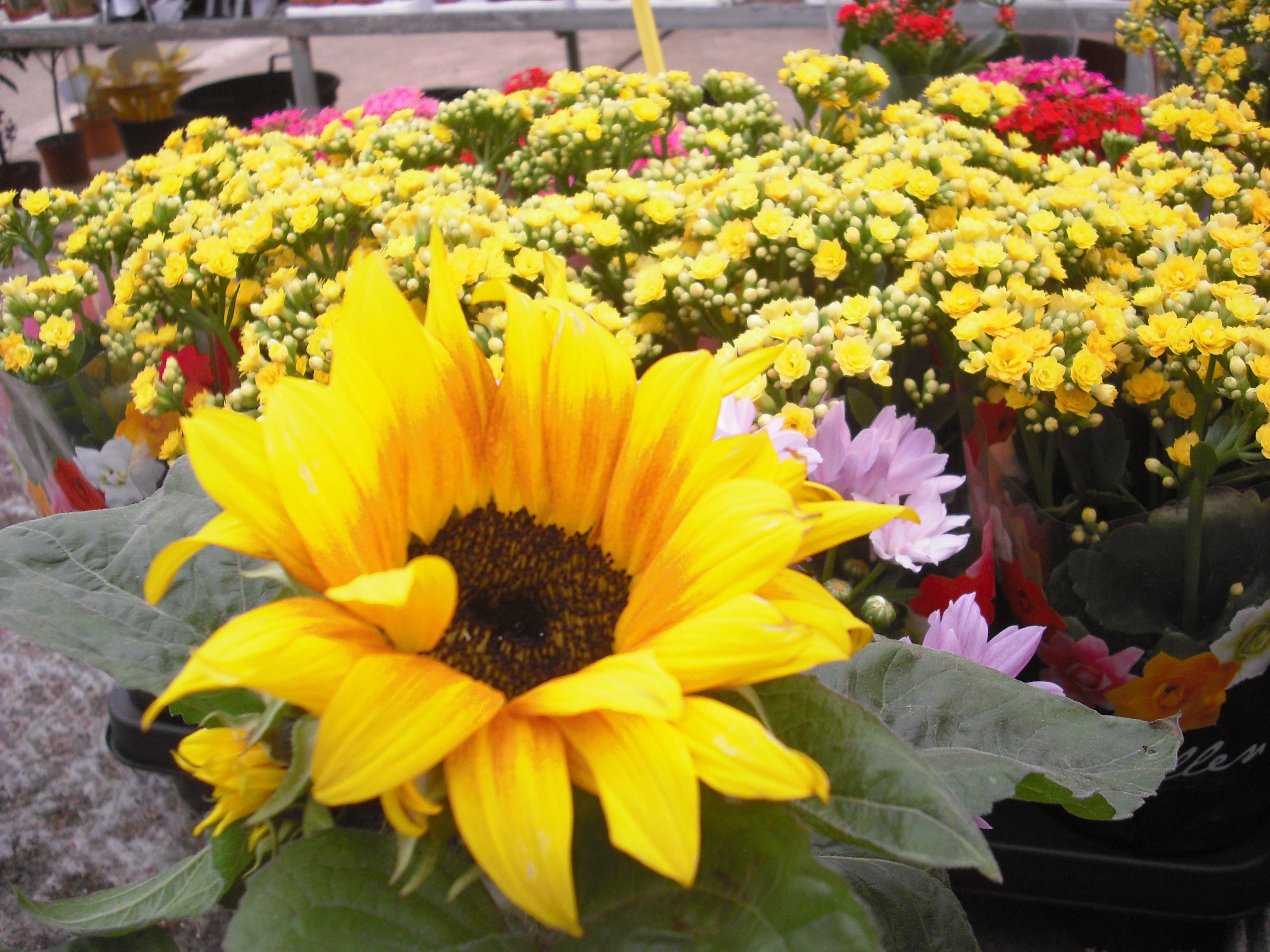 flores-maio-2013-219.JPG