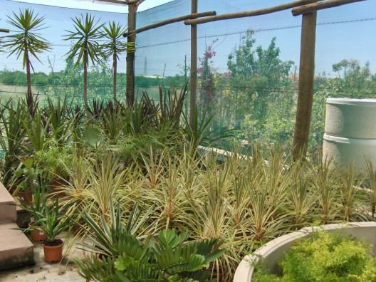 plantas-exterior1.jpg
