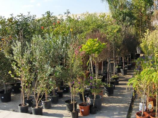 plantas-exterior3.jpg