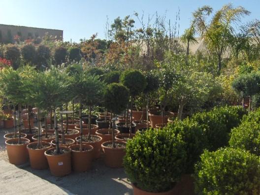 plantas-exterior8.jpg