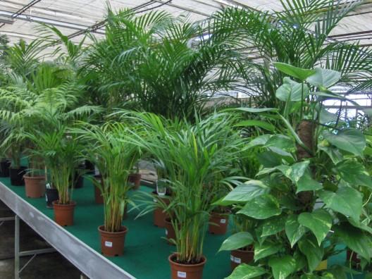 plantas-interior.jpg