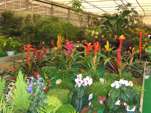 plantas-interior6.jpg