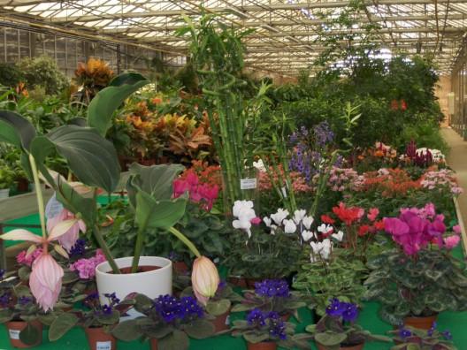 plantas-interior7.jpg